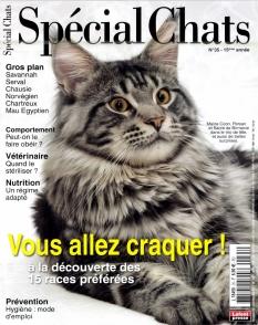 Spécial Chats |