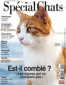 Spécial Chats |