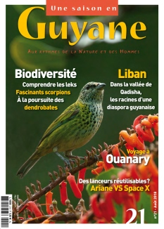 Une saison en Guyane |