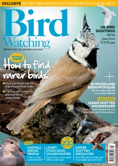 Bird Watching |