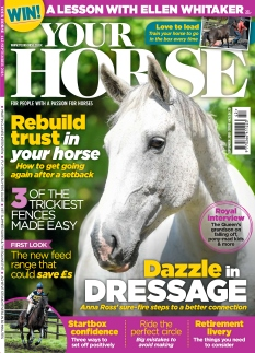 Your Horse |