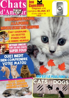 Chats D'Amour |